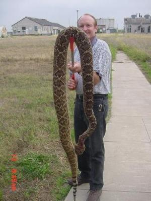 Texas Snake!